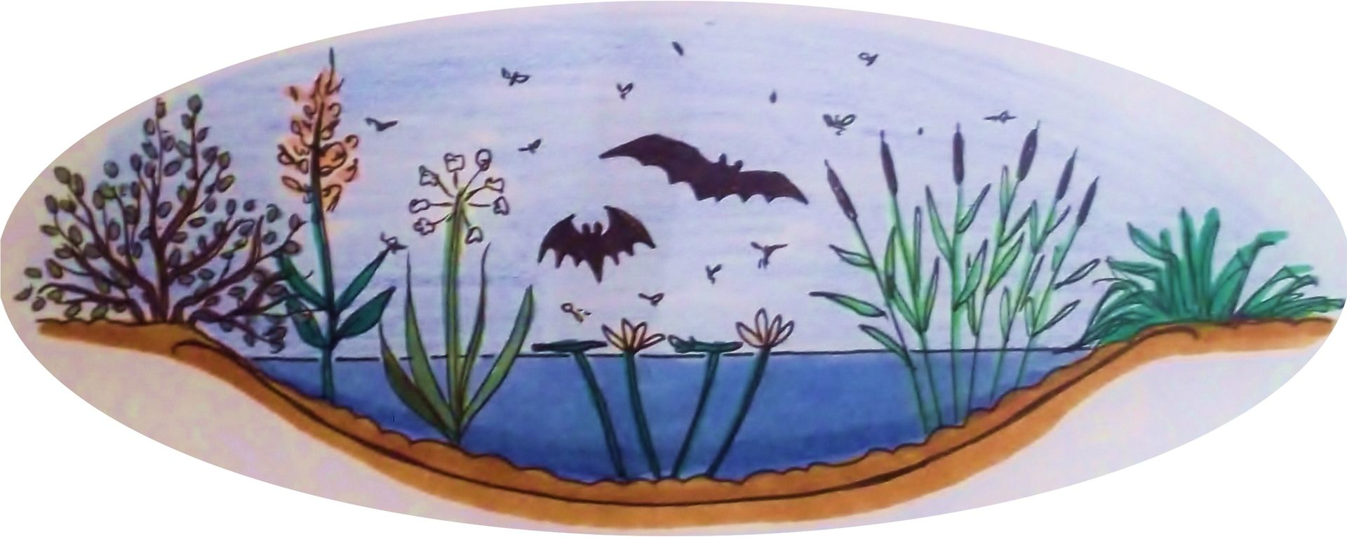 Die Zeichnung zeigt einen Gartenteich mit Wasserpflanzen und Uferbepflanzung und Fledermäuse, die über dem Teich fliegen // The drawing shows a garden pond with water plants and bank plants and bats flying over the pond