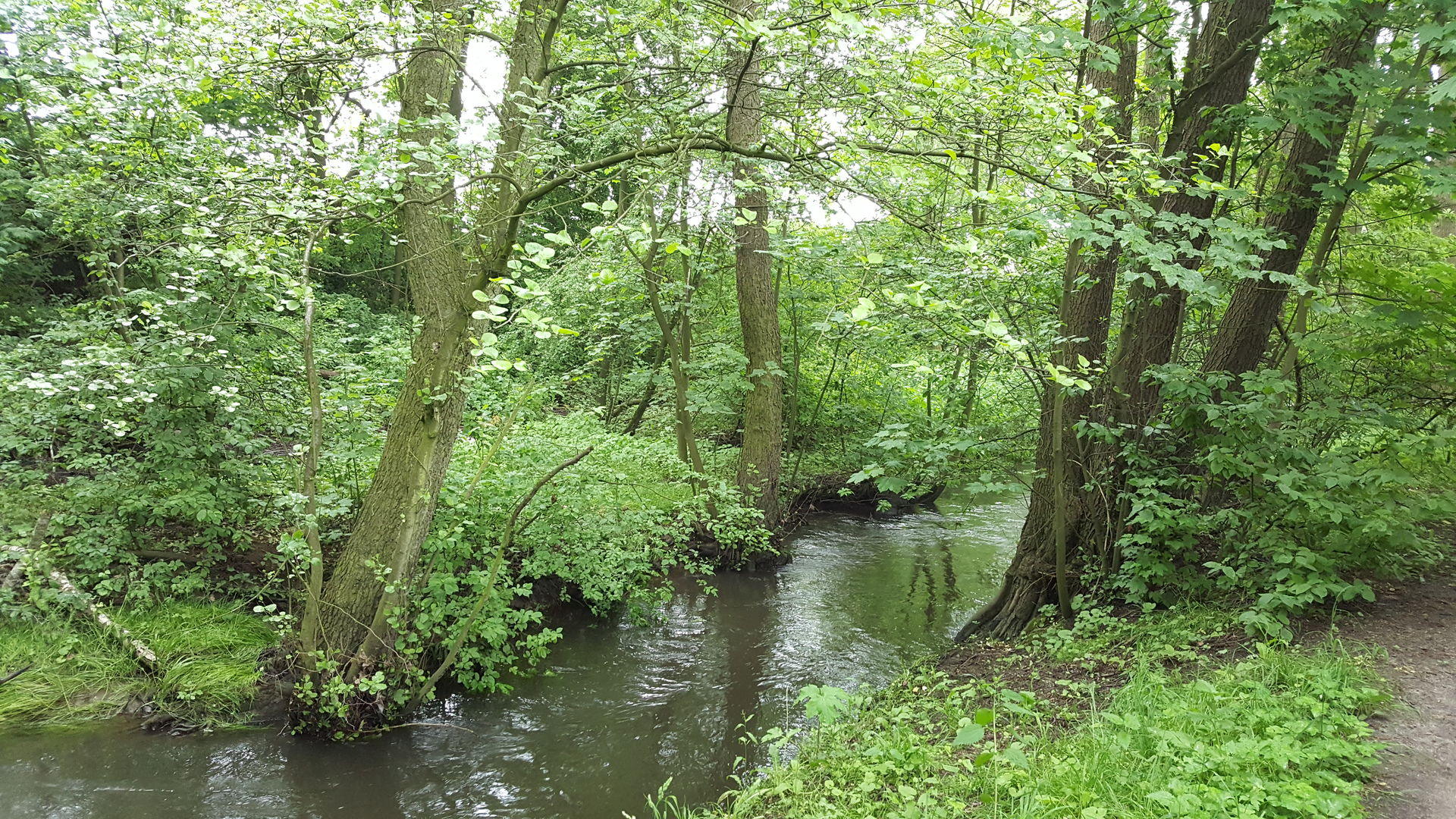 Das Foto zeigt den Bach Kollau im Wald bei Niendorf Hamburg // the photo shows the creek Kollau in the forest near Hamburg Germany