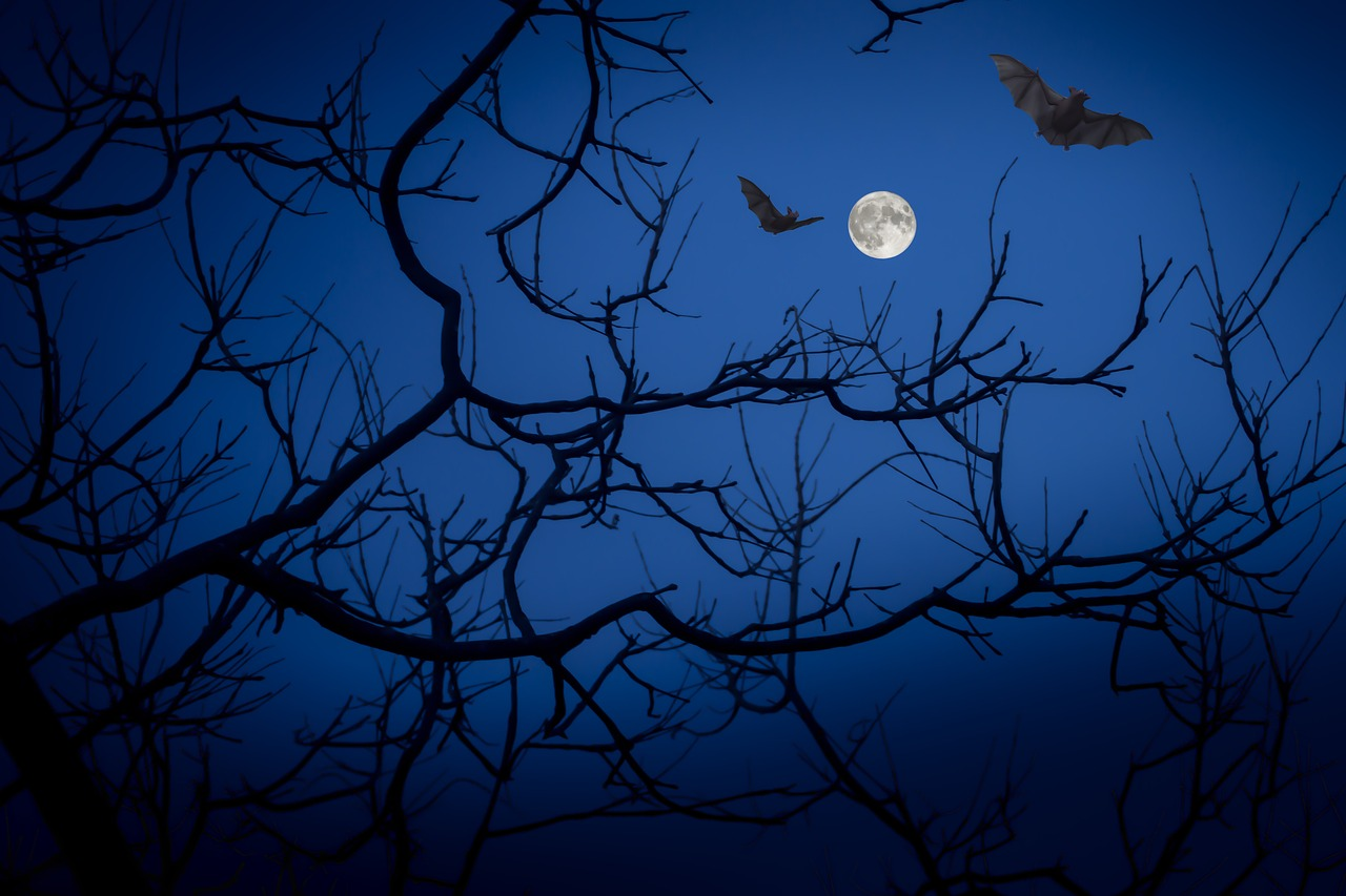 Das Bild zeigt zwei fliegende Fledermäuse im Mondlicht. The picture shows two flying bats in the moonlight.