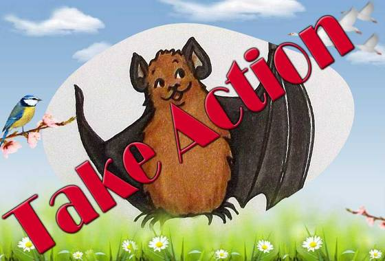 Die Zeichnung zeigt BUNDchen Fledermaus, er sagt zu dir Take Action! Werde aktiv für den Fledermausschutz! //  The drawing shows BUNDchen bat, he says to you Take Action! Get active for bat protection!