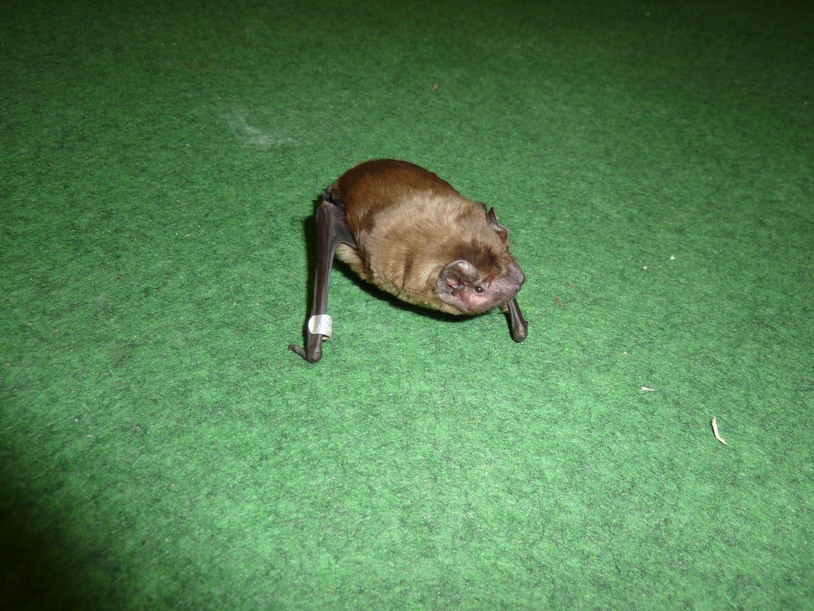 Batmom Injured