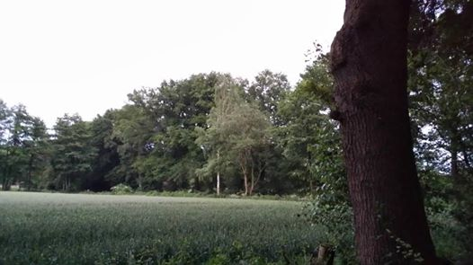 Das Foto zeigt eine abendliche Landschaft, in der Fledermäuse ausgewildert wurden // The photo shows an evening landscape in which bats were released