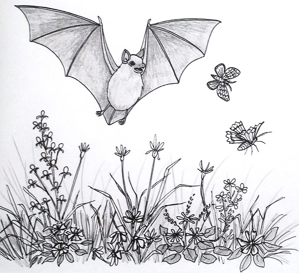 Die Zeichnung zeigt eine Fledermaus, die über einer Blumenwiese Insekten jagt //  78/5000 The drawing shows a bat hunting insects over a flower meadow