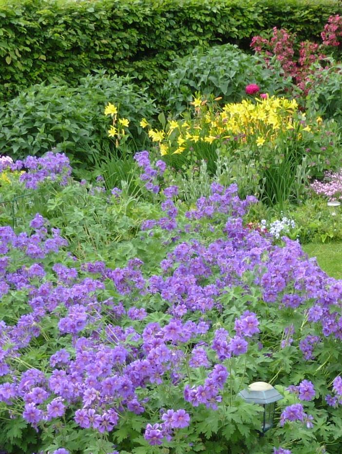 Garten Für Fledermäuse