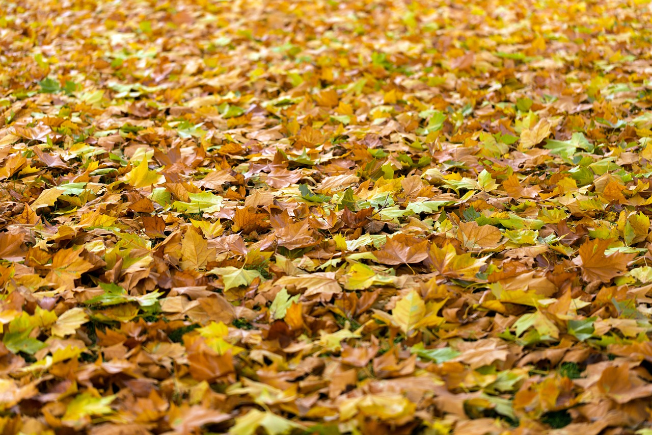 Das Foto zeigt Laub im Herbst // The photo shows leaves in Autumn