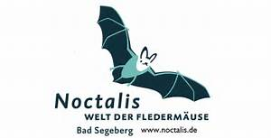 Die Zeichnung zeigt das Logo des Noctalis, eine fliegende Fledermaus über dem Schriftzug Noctalis Welt der Fledermäuse // The drawing shows the logo of Noctalis, a flying bat over the signature Noctalis world of bats
